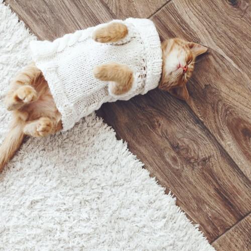 Cat on Hardwood Flooring | Dalton Flooring Outlet